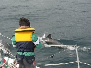 Marine discovery boy-watching-a-common-dolphin